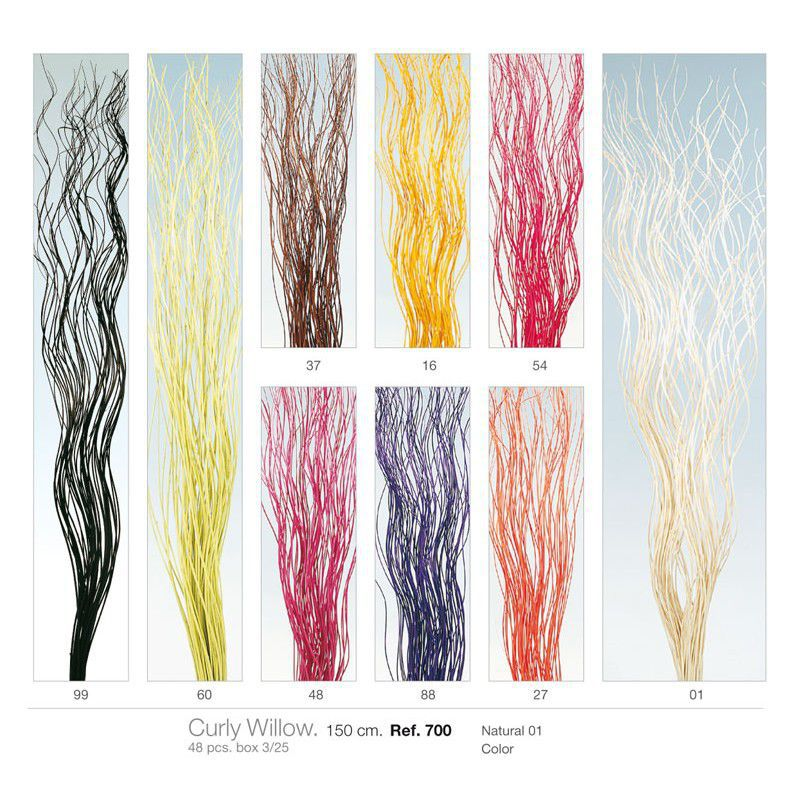Curly willow 150 cms. 48 pcs.