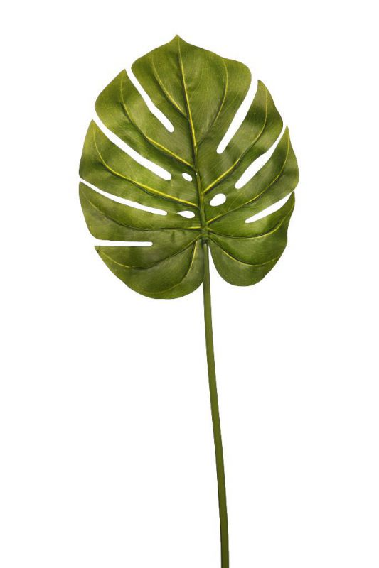 Hoja monstera color verde