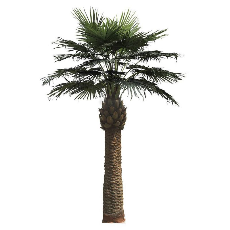 PALMERA WASHINGTONIA 550CM