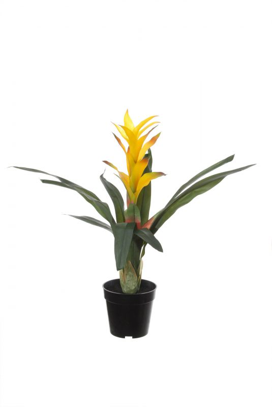 GUZMANIA EN MACETA ALT 60CM COLOR AMARILLO