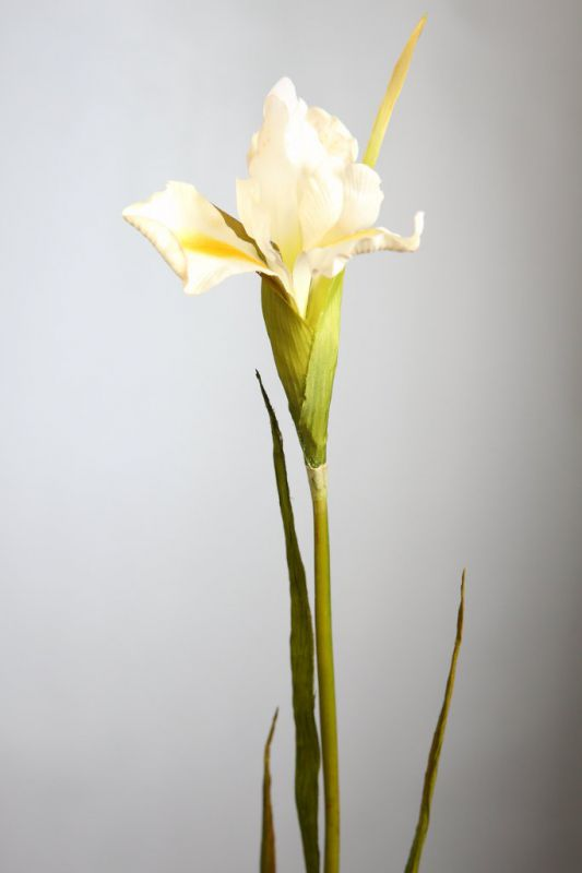 IRIS, VARA 78 CM COLOR BLANCO