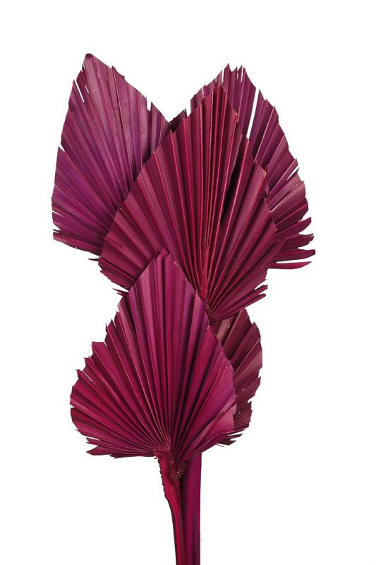 PALM SPEAR X6 45CM MORADO