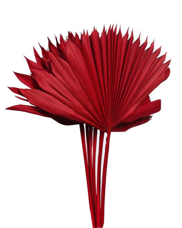 PALM SUN SPEAR X6, 45 CM ROJO