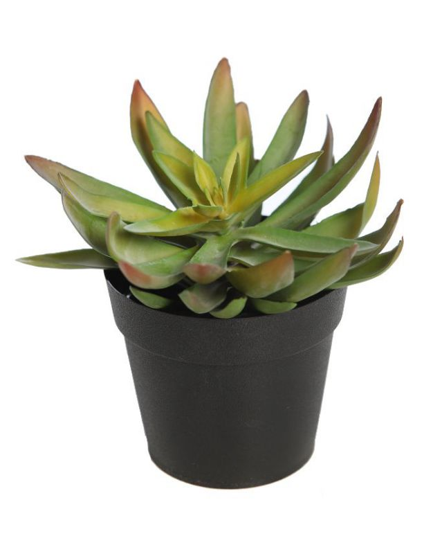 Cactus crasa echeveria artificial con maceta alt 15cm